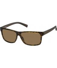 Polaroid Мужские pld2027-ые m31 И.Г. Havana коричневый поляризованных солнцезащитных очков