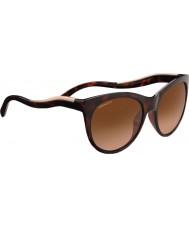 Serengeti 8567 valentina черепаховые солнцезащитные очки